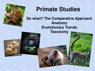 Primate Studies
