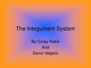 The Integument System