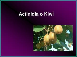 Actinidia o Kiwi