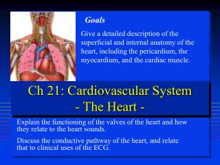 Ch 21: Cardiovascular System - The Heart -