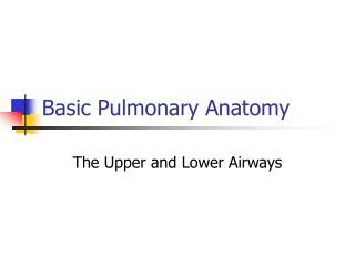 Basic Pulmonary Anatomy