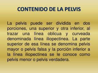 CONTENIDO DE LA PELVIS