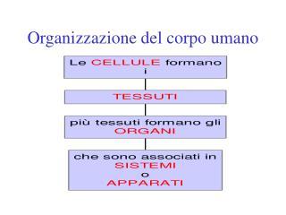 Organizzazione del corpo umano