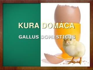 KURA DOM CA