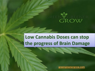 Low Cannabis Doses can stop the progress of Brain Damage