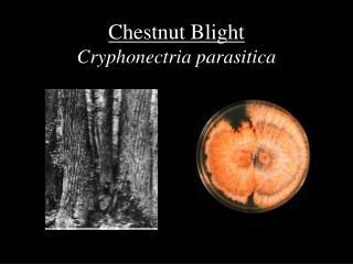 Chestnut Blight Cryphonectria parasitica
