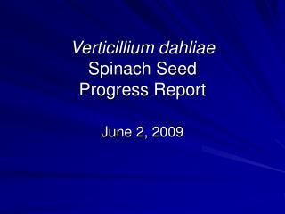 Verticillium dahliae Spinach Seed Progress Report