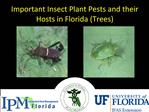Important Insect Plant Pests and their Hosts in Florida Trees