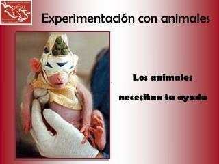 Experimentaci n con animales