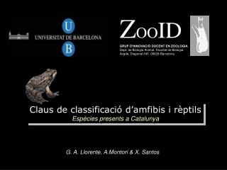 Claus de classificaci  d amfibis i r ptils Esp cies presents a Catalunya