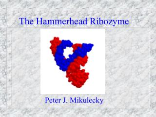 The Hammerhead Ribozyme