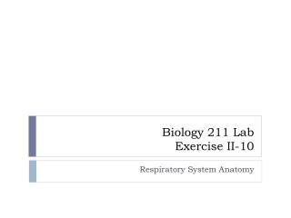 LAB Exercise II-10  Respiratory System Anatomy