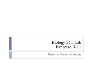 LAB Exercises II-11 Digestive System Anatomy