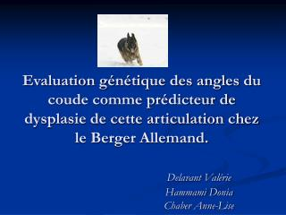Evaluation g n tique des angles du coude comme pr dicteur de dysplasie de cette articulation chez le Berger Allemand.