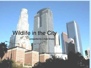 Wildlife in the City                            prepared by Linda Brady