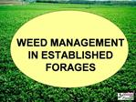 WEED MANAGEMENT IN ESTABLISHED FORAGES