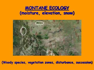 MONTANE ECOLOGY moisture, elevation, snow