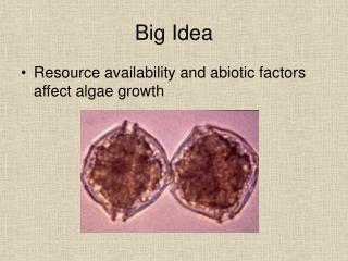 Big Idea