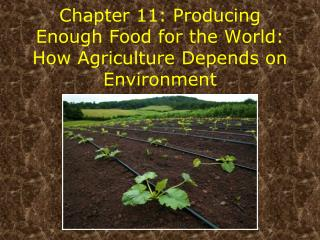 Chapter 11: Producing Enough Food for the World: How Agriculture Depends on Environment