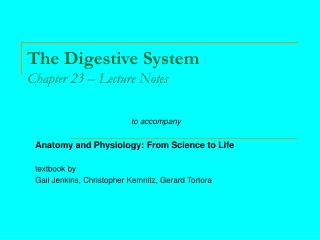 The Digestive System Chapter 23   Lecture Notes