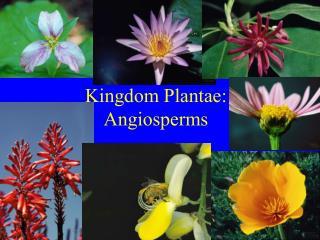 Kingdom Plantae: Angiosperms