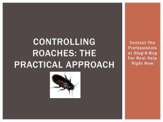 controlling roaches: the practical approach