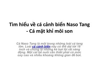 Tìm hiểu về cá cảnh biển Naso Tang - Cá mặt khỉ môi son