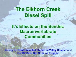 The Elkhorn Creek Diesel Spill  It s Effects on the Benthic Macroinvertebrate Communities