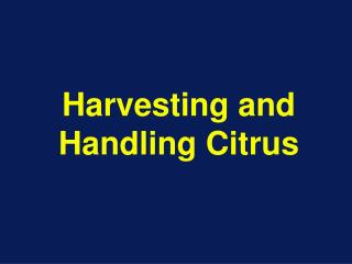 Harvesting and Handling Citrus