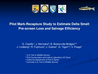 Pilot Mark-Recapture Study to Estimate Delta Smelt  Pre-screen Loss and Salvage Efficiency
