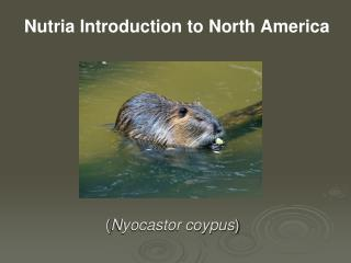 Nutria Introduction to North America