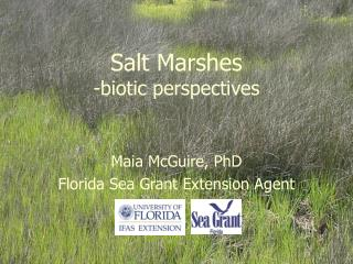 Salt Marshes -biotic perspectives