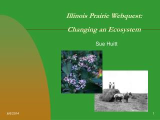 Illinois Prairie Webquest:  Changing an Ecosystem