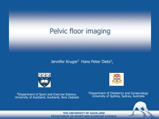 Pelvic floor imaging