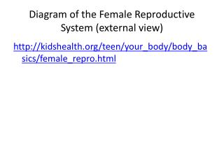 Diagram of the Female Reproductive System external view