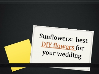 Sun flowers for your wedding