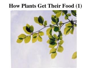 How Plants Get Their Food 1