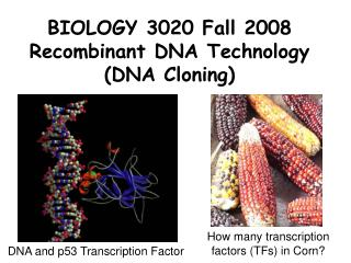 BIOLOGY 3020 Fall 2008 Recombinant DNA Technology DNA Cloning