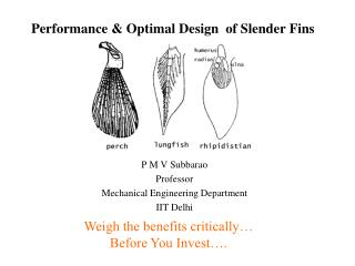 Performance  Optimal Design  of Slender Fins