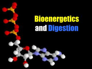 Bioenergetics  and Digestion