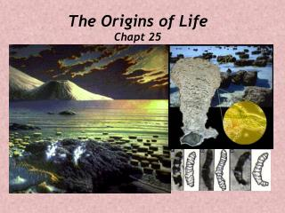 The Origins of Life Chapt 25