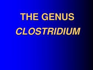 THE GENUS CLOSTRIDIUM