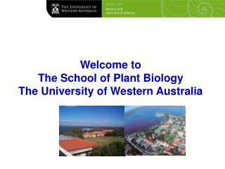 Welcome to  The School of Plant Biology  The University of Western Australia