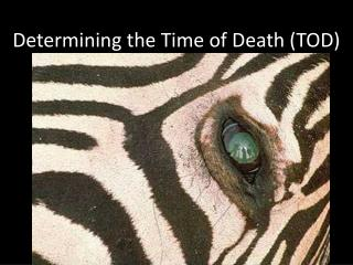 Determining the Time of Death TOD