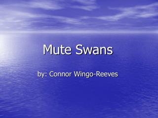 Mute Swans  by: Connor Wingo-Reeves