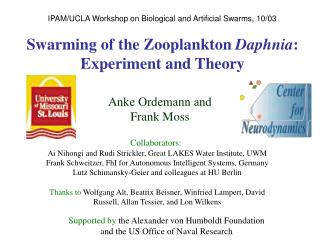 Swarming of the Zooplankton Daphnia: Experiment and Theory
