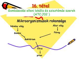 16. t tel