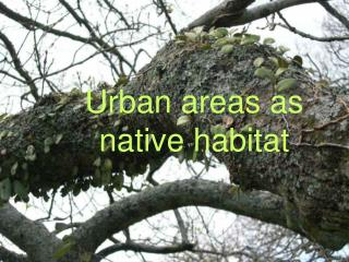 Urban areas as native habitat