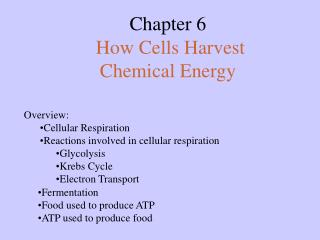 Chapter 6  How Cells Harvest  Chemical Energy