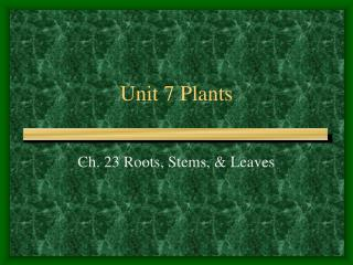 Unit 7 Plants